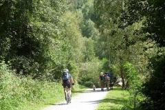 Packpferde-am-Etschtalradweg