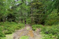 Wanderweg-im-Schlamm