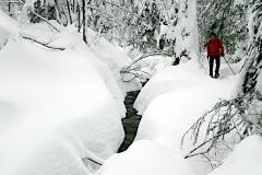 2019-01_041_Bayerischer-Wald-im-Winter