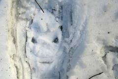 Abdruck vom Schneeschuh