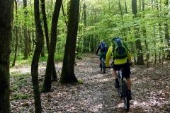 Im-Forchheimer-Wald-auf-dem-Weg-nach-Reuth