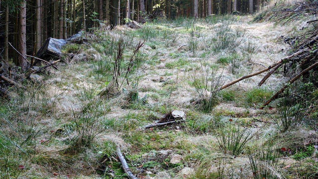 Reif auf altem Forstweg