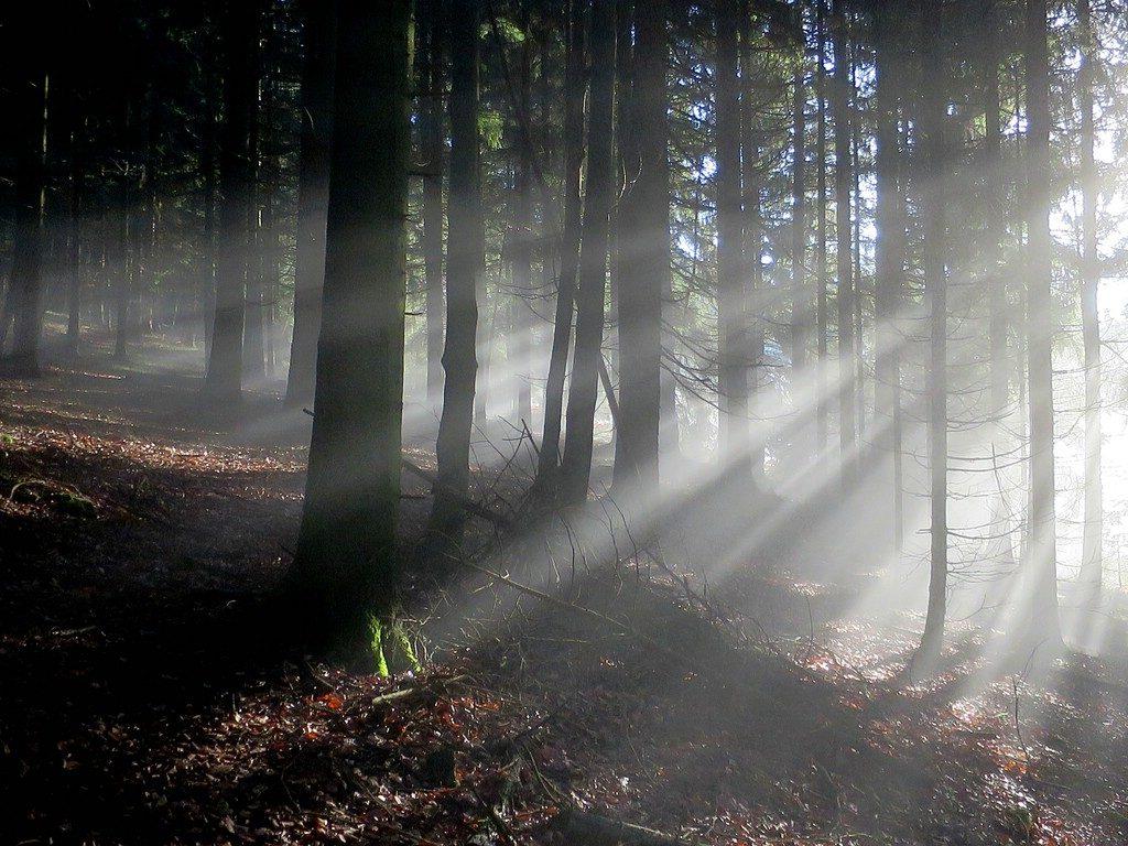 im Wald löst sich der Nebel im Licht auf