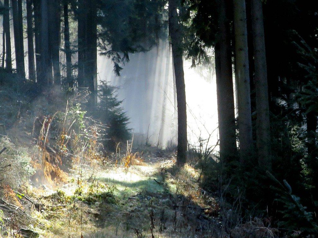 verwachsener Forstweg im Frühnebel