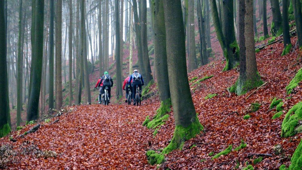 Biker fahren mit MTB über Laubwege im Wald