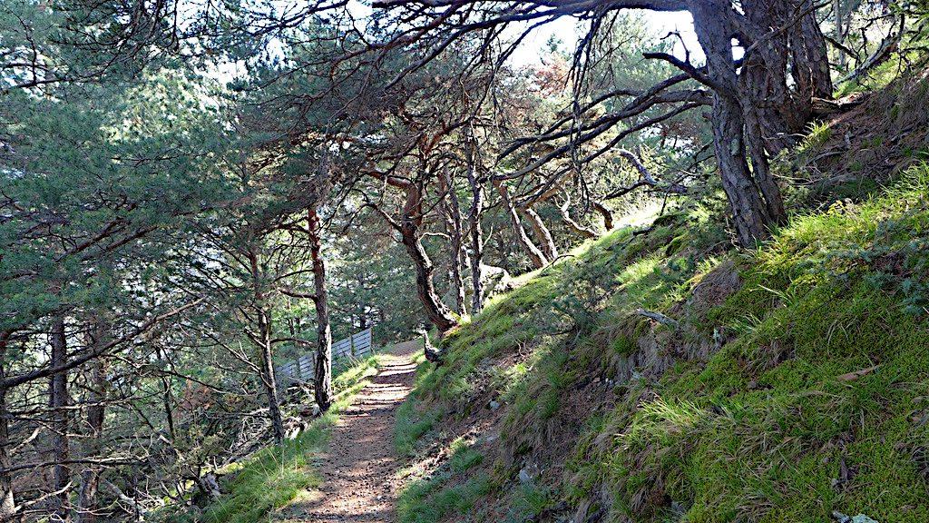 Ein Waldstück im Marteltal im Vinschgau