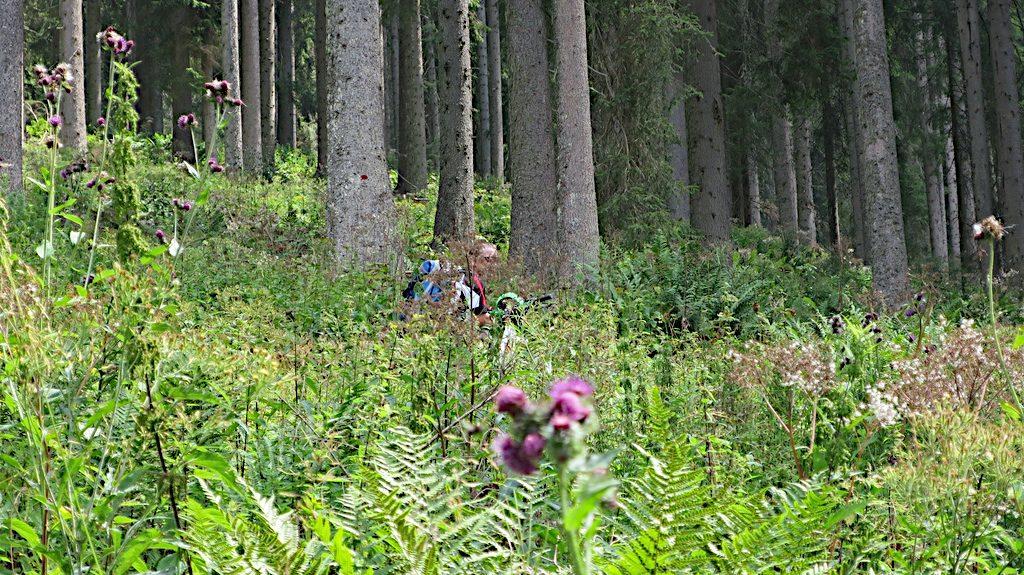 Ein kaum erkennbarer Biker kämpft sich, auf dem Weg zum Passo del Roccollo, durch dichtes Unterholz