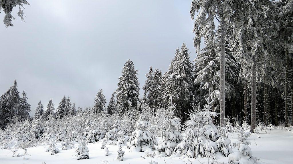 Winterwald beim Schneeschuh gehen