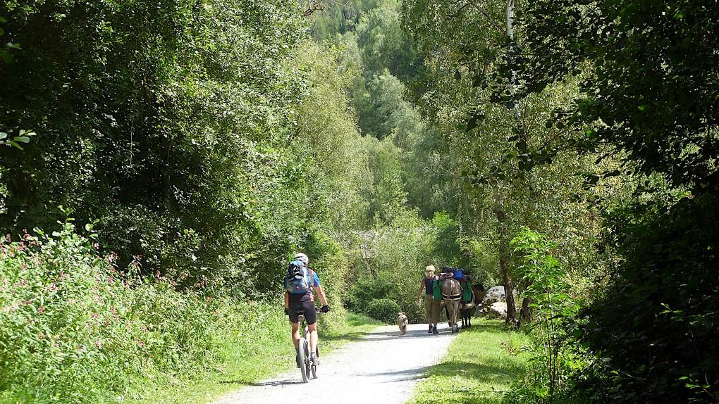 Wanderer mit Packpferden gehen den Etschtalradweg